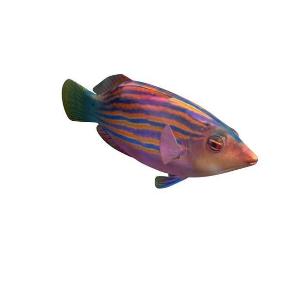 濑鱼打印模型